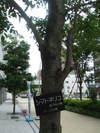 2006_07250020
