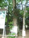 2006_10080010