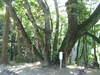 2006_10090018